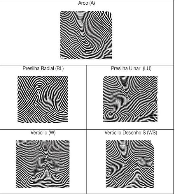 le tre possibili strutture delle impronte digitali: Arco, Cappio e Verticolo nelle loro varianti