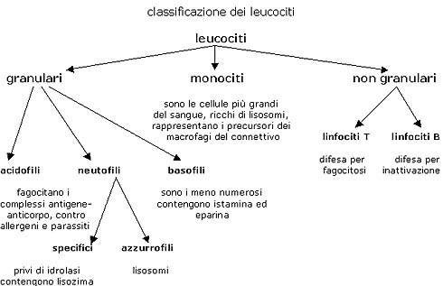 Classificazione di helminths i tipi parasitizing alla persona