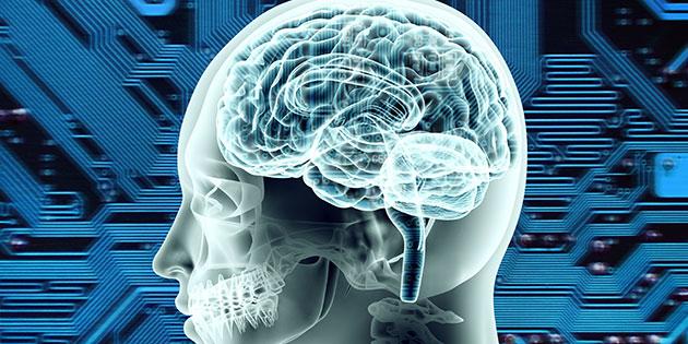 Il sistema dei neuroni specchio nell 39 uomo for Specchio uomo