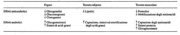 Azioni dell'insulina a livello del fegato, del tessuto adiposo e del tessuto muscolare