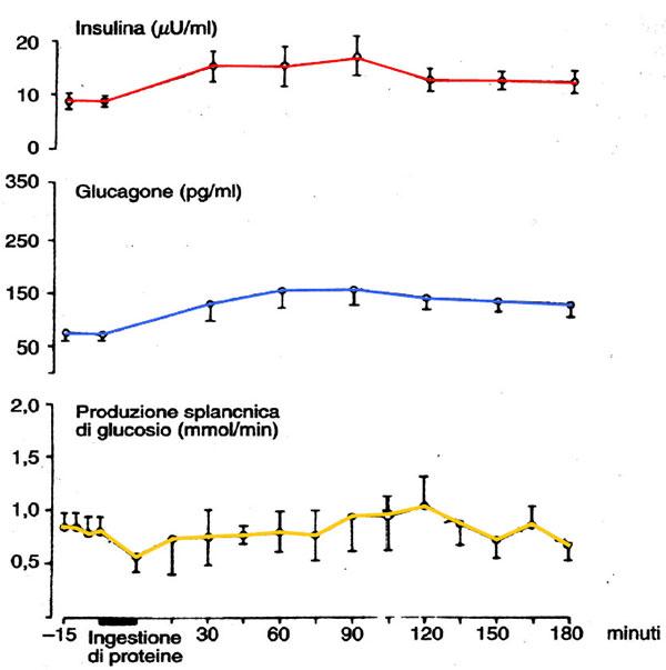 Influenza dell'ingestione di proteine sulle concentrazioni plasmatiche di <a href=