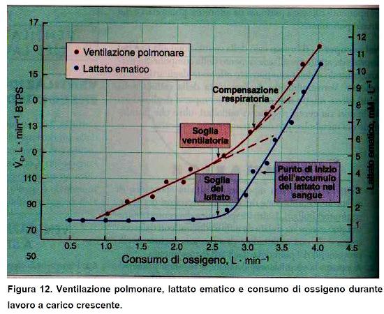 ventilazione_polmonare
