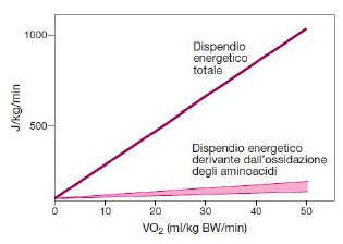 Dispendio energetico