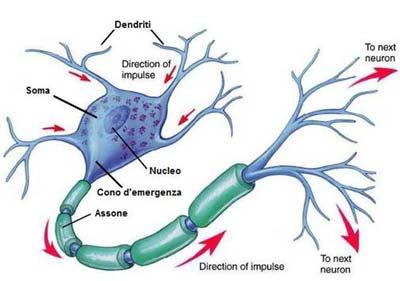 diversi tipi di neurone