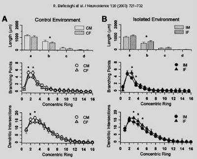 Gli effetti del sesso sulle cellule stellate