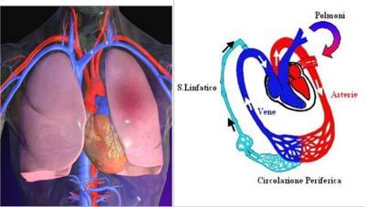 polmoni