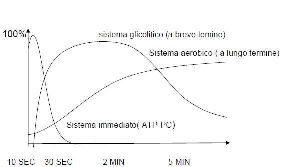 sistema glicolitico