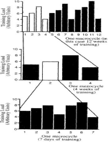 grafico struttura di una periodizzazione di un macrociclo di 12 settimane