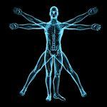 Anatomia del muscolo